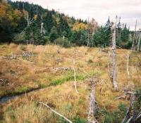 #47 Deer Mountain Bog