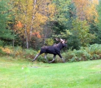 Moose at Treats and Treasures. Brian Rugg