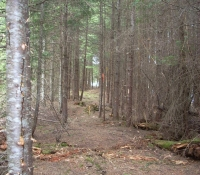 #46 Moose Alley Trail