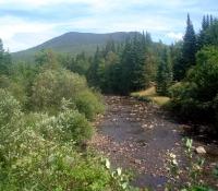 Mt. Whitcomb at Nash Stream